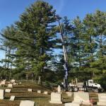 articulating crane in cemetery doing tree work